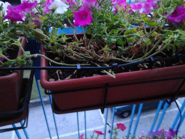 Ilampidigenio sistema irrigazione balcone - Irrigazione balcone ...